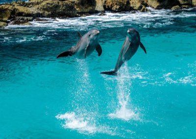 delfini mauritius